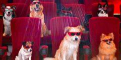 5 интересных фильмов с животными для всей семьи